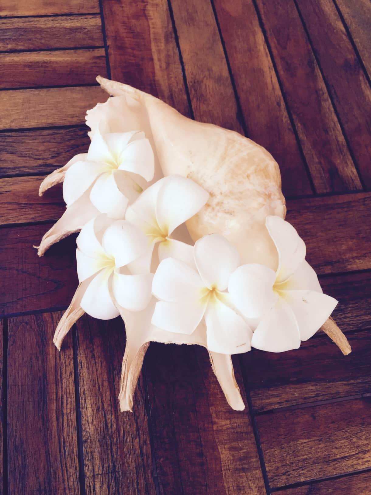Beach House garden has frangipani tree