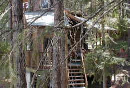 Tree House North with Stairs to First Floor(2)