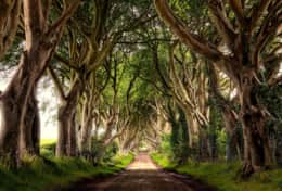 The Dark Hedges - site seeing near Limepark self catering cottages on the North coast of Ireland