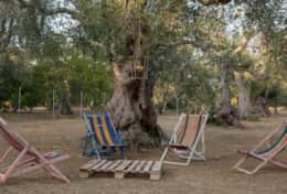 Apoikia - outdoor with sun chairs - Specchia - Salento