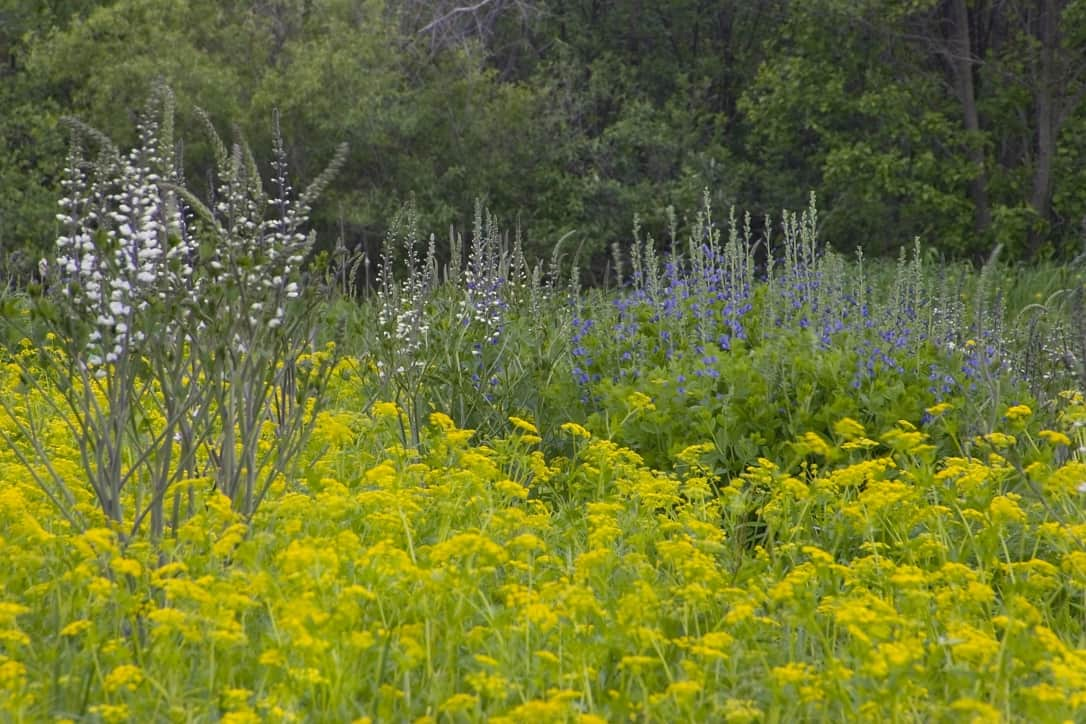 Wisconsin wildflowers at Pine Grove Park