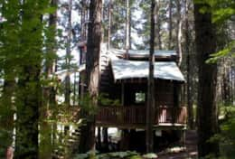 Tree House West View From the Forest